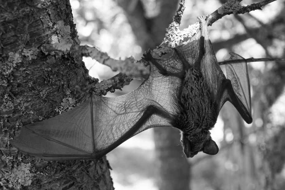 grayscale photo of a bat hanging on a tree branch